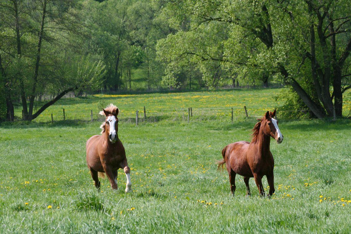 Ecurie Active - chevaux en liberté